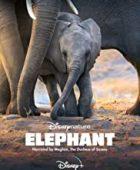 Fil - Elephant (2020) - tr alt yazılı izle