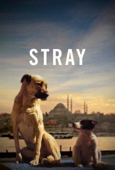 Stray (2020) Türkçe Dublaj izle